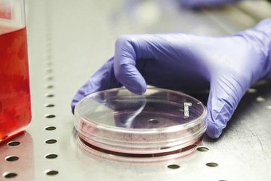 Perché la vitamina E può aumentare il rischio di tumore alla prostata